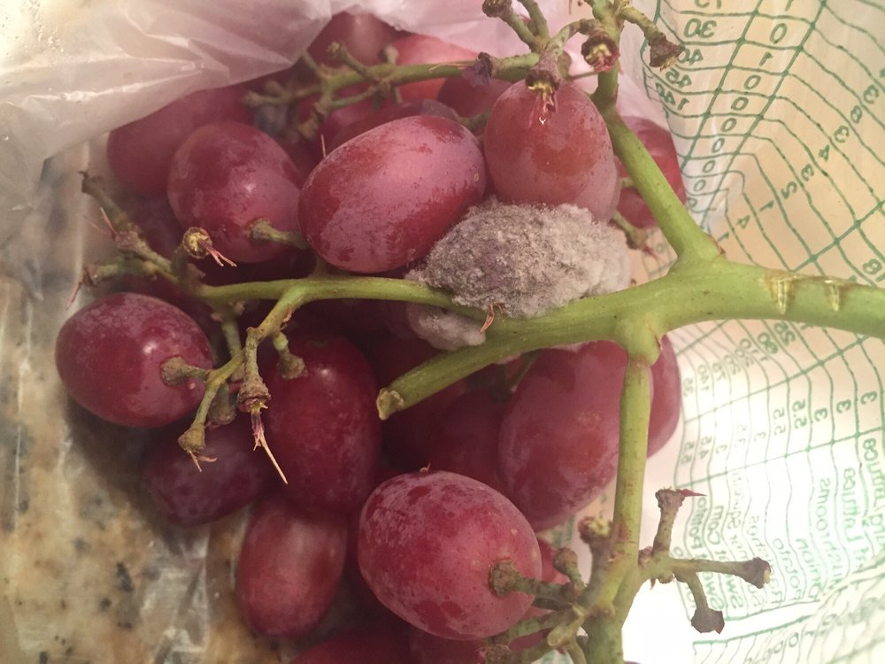 A moldy grape delivered by some absent-minded Instacart shopper